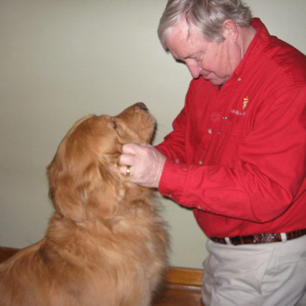 One of the vets checking out a golden retriever